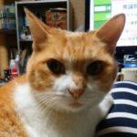 広島市中区K様 猫のキキちゃん