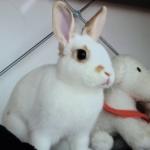 広島市安佐南区N様 ウサギのバロンちゃん