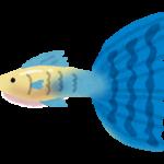 熱帯魚の火葬も可能です。