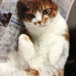 広島市佐伯区S様 猫のにゃんこちゃん