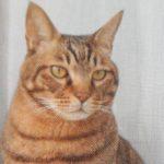 広島市佐伯区Y様 猫のペコちゃん